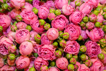 Background of pink flowers roses in large quantity. The texture of roses. Beautiful fragrant flowers for loved ones.