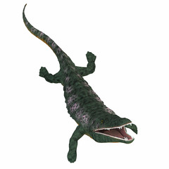 Archegosaurus Amphibian on White - Archegosaurus was an amphibian tetrapod that lived in Europe during the Permian Period.