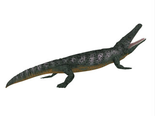 Archegosaurus Side Profile - Archegosaurus was an amphibian tetrapod that lived in Europe during the Permian Period.