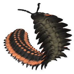 Arthropleura on White - Arthropleura was a giant insect invertebrate that lived in North America and Scotland during the Carboniferous Period.
