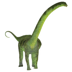 Puertasaurus Dinosaur on White - Puertasaurus was a herbivorous sauropod dinosaur that lived in Patagonia in the Cretaceous Period.