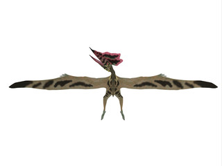 Thalassodromeus Pterosaur Profile - Thalassodromeus was a carnivorous pterosaur that lived in Brazil in the Cretaceous Period.