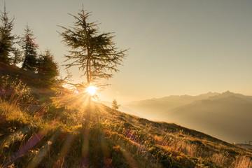 Fototapete - Morgensonne über den Alpen