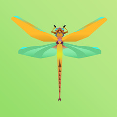 insect dragonfly on a green background