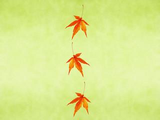 秋 もみじ 紅葉