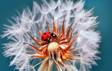 Fotobehang Macrofotografie Ladybug