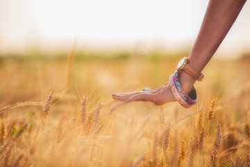 Girl relaxing in a wheat-field.