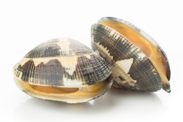 live clams isolated on white