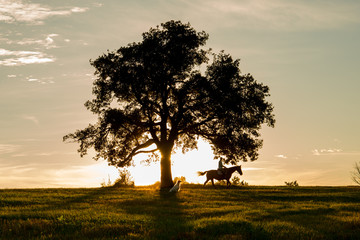 Horse rider and beautiful view in sunset