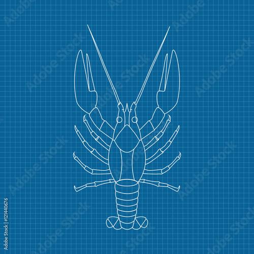 Lobster hand drawn sketch on blueprint background stock image and hand drawn sketch on blueprint background malvernweather Gallery