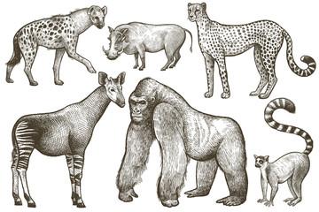 African animals hyena, okapi, cheetah, gorilla, warthog, lemur.