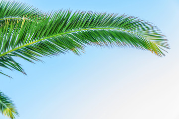 Palm leaf close with sky background