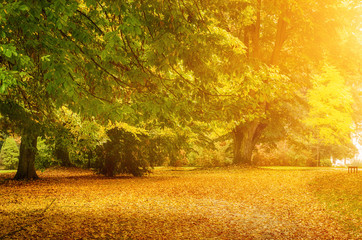 Autumn sunny park with orange trees and empty alley , natural seasonal background