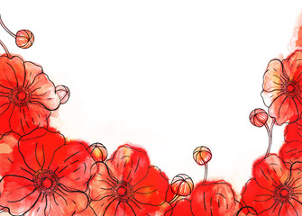Red watercolor poppy background on white