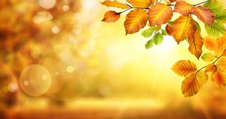 Gelbe Blätter verzieren einen unscharf leuchtenden Hintergrund für den Herbst