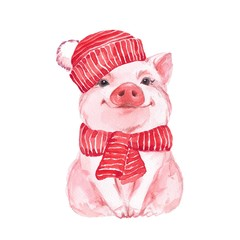 Funny pig in a red hat and scarf. Cute watercolor illustration