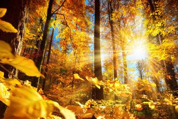 Wall Mural - Strahlender Herbst im Wald mit viel Sonne und gold leuchtenden Blättern