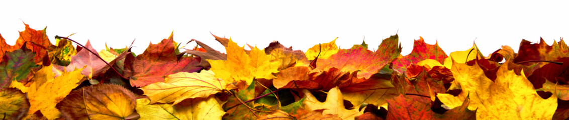 Bunte Blätter als Herbst Bordüre, isoliert auf reinem Weiß