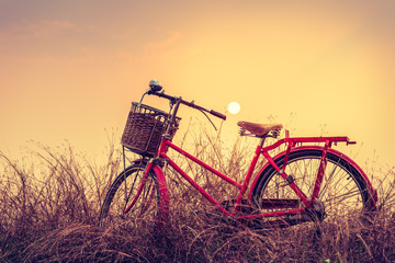 Vintage Bicycle with summer background at sun set (vintage proce
