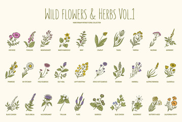 Wild flowers and herbs hand drawn set. Volume 1. Vintage vector illustration.