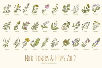 Wild flowers and herbs hand drawn set. Volume 2. Vintage vector illustration.
