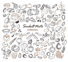 Hand-drawn doodles of the different seeds and nuts: walnuts, pistachios, hazelnuts, cashew, chestnut, linden, poppy, pea, bean, apple etc. Line art illustrations.