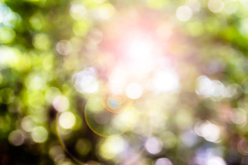 Abstract blurred background from nature