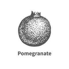 Vector illustration hand-drawn pomegranate