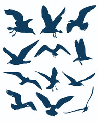 vector seagull silhouettes