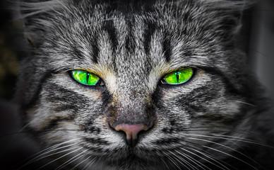 Severe, predatory evil cat eyes