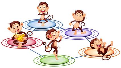 Monkeys standing on round plates