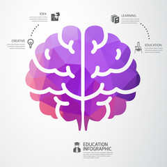 infographic Template brain education and science concept vector