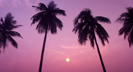Silhouette of Tropical Coconut Trees during Sunset or Sunrise at the Island, Romantic Scenery