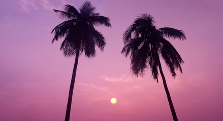 Silhouette of Couple Tropical Coconut Trees during Sunset or Sunrise at the Island, Romantic Scenery