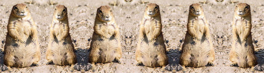 Deformed kaleidoscopic pattern of agitated female gopher standing on sand under sunlight