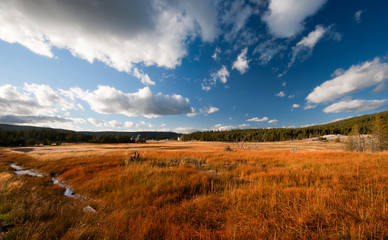 Yellow field in Yellowstone National Park, USA