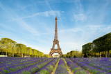 Purple lavender filed with Eiffel tower in Paris, France