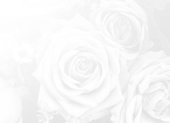 rose flower nature background design love Valentines day for des