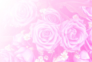 rose flower nature background design love Valentines day for des