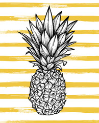 Hand drawn vector illustration - Pineapple with striped backgrou