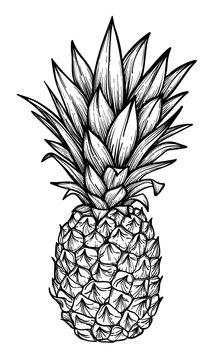 Hand drawn vector illustration - Pineapple. Exotic tropical fruit