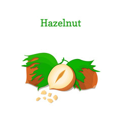 Hazelnuts with leaves. Vector illustration of a handful of hazel nut isolated on white background it can be used as packaging design element, printing brochures on healthy and vegetarian diet