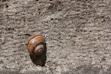 Snail on a stone surface