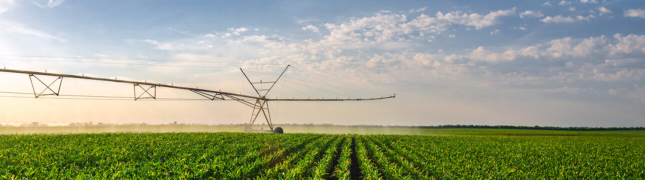 Agricultural irrigation system watering corn field on sunny summ