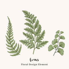 Set with ferns.
