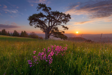 Beautiful mountain landscape with solitude tree at dawn