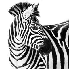 Door stickers Zebra Zebra in Snow II
