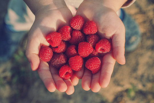 raspberries in the hands of a child