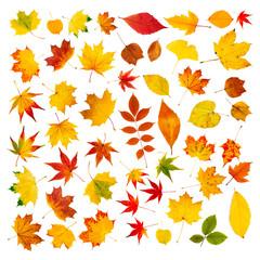 Wall Mural - Große Herbstblätter Collage vor weißem Hintergrund
