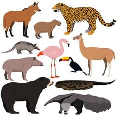 Vector set of cartoon south american animals. Jaguar, anaconda, flamingo, maned wolf, tapir, capybara, anteater, armadillo, toucan, guanaco, spectacled bear.